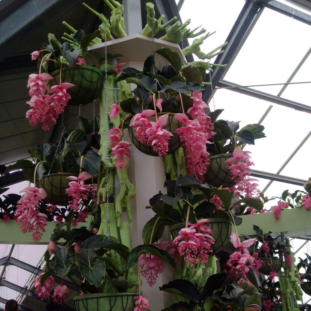 Expo de fleurs exotiques au Keukenhof