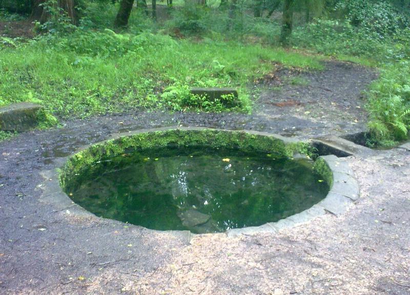 Font de Viljot dans la forêt de Tronçais