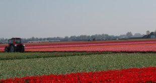 La route des tulipes
