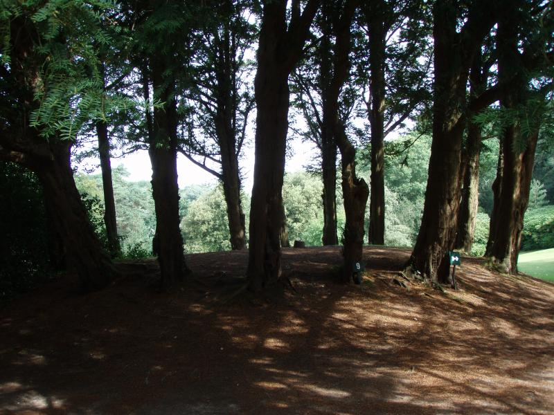 Le cercle des Fées aux Bois des Moustiers