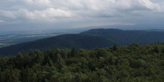 Moutonnement boisé vue du Wintersberg