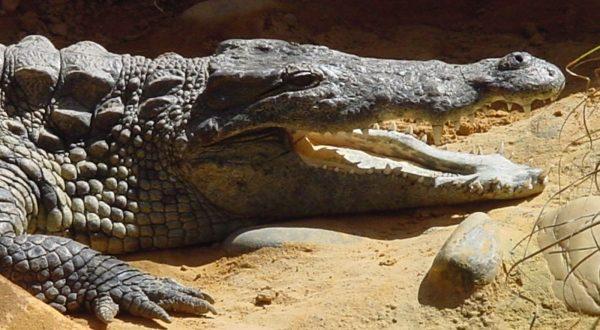 Ferme des crocodiles à Pierrelatte