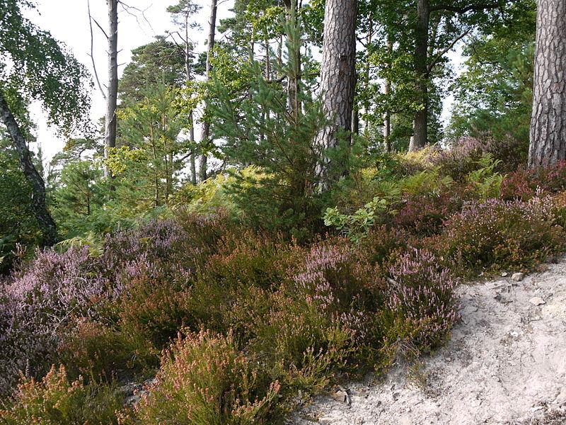 Forêt de Rambouillet
