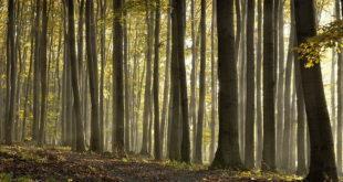 La Forêt de Lyons