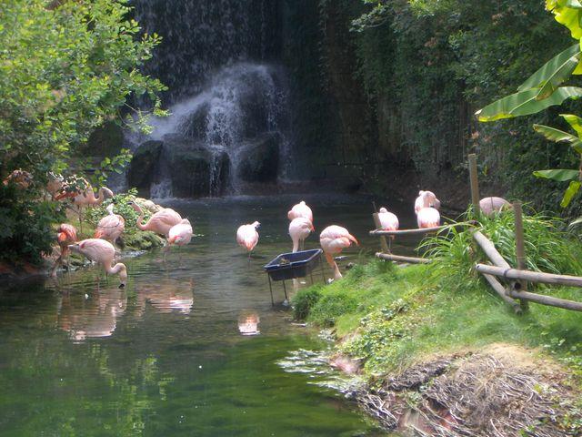 Flamands roses au zoo d'Amneville