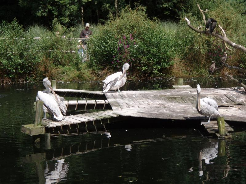Parc de Tregomeur
