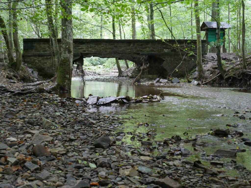 Sentier dans la forêt de St Hubert